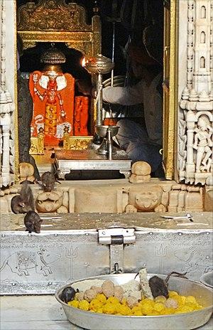 Karni Mata - Image: La statue de la déesse entourée des rats sacrés (Temple de Karni Mata) (8423510937)