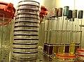 Laboratório de Análises de Água VI - panoramio.jpg