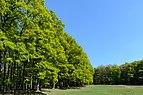 Lainzer Tiergarten 20160430 01.JPG