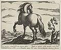 Landschap met paard uit Duitsland. NL-HlmNHA 1477 53011503.JPG