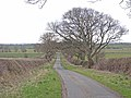 Lane near West House Farm - geograph.org.uk - 1800083.jpg