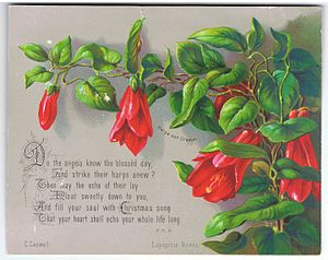 Lapageria - Image: Lapageria Rosea, chromolithograph by Helga von Cramm, with verse by F.R. Havergal