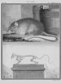 Le Rat - Rat, with Skeleton - Gallica - ark 12148-btv1b2300254t-f38.png