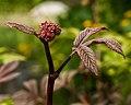 Leaf Texture (18439847531).jpg