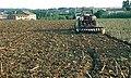 Les Plantes Cultivades. Cereals. Imatge 202.jpg