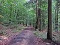 Lesná cesta - panoramio (6).jpg