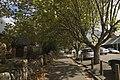Leura - panoramio (9).jpg
