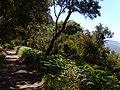 Levada do Risco, Madeira, Portugal, June-July 2011 - panoramio (29).jpg