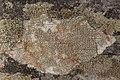 Lichen (29062400358).jpg