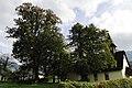 Linden in Dollich.jpg
