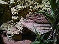 Lizard (7822208780).jpg