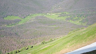 Bark beetle - Image: Lodgepole Pine Forest from Cascade Mountain
