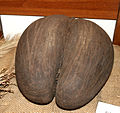 Lodoicea maldivica seed.jpg