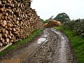 Logging - geograph.org.uk - 507267.jpg