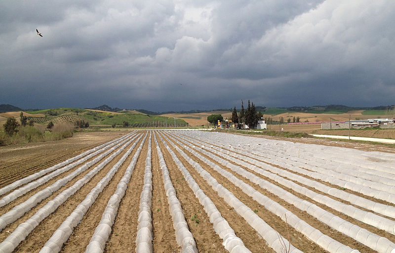 File:Low tunnels for vegetable production 01.jpg