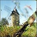 Lurking - Flickr - filtran.jpg