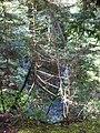 Lynn creek may 2012 - panoramio (1).jpg