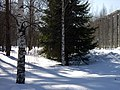 Lyovintsy, Kirovskaya oblast', Russia, 612079 - panoramio (94).jpg