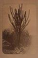 Météorite de Bendégo - rapport présenté au Ministère de l'Agriculture, du Commerce (...) et le transport du météorite de Bendégo de l'interieur de la province de Bahia au Musée National (page 76 crop).jpg