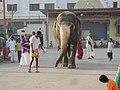 MANTRALAYAM-Dr. Murali Mohan Gurram (12).jpg