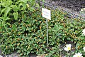 MSU Horticulture Gardens 46.jpg