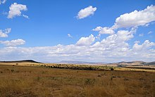 Maasai-Mara-Typical-Scenery.JPG