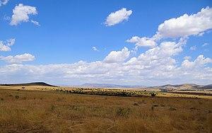 "Maasai Mara - Typical ""spotted"" Maasai Mara scenery"