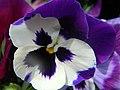 Macro, Purple Flower - panoramio.jpg
