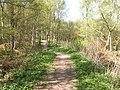 Magus Muir Millennium woodland - geograph.org.uk - 167513.jpg
