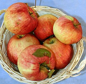 James Grieve (apple) - Image: Malus James Grieve