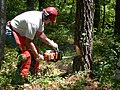 Man holds chainsaw in forest.jpg