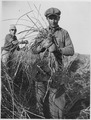 Man holds clump of hardstem bullrush rootstock - NARA - 283818.tif