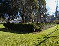 Manor Park, Sutton, Surrey, Greater London trees (5).jpg
