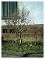 March Spring Emmendingen - Master Season Rhine Valley Photography - panoramio (2).jpg