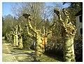 March Spring Emmendingen - Master Season Rhine Valley Photography 2013 - panoramio (1).jpg