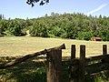 Marshall Gold Discrovery State Park - panoramio.jpg