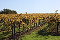 Martin Ray Vineyards.jpg