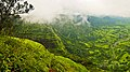 Matheran in August2012 - panoramio (27).jpg