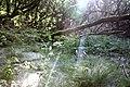 Maya Wendler - GPS 51.201643, 6.883316 - Naturschutzgebiet Unterbacher See (Eller Forst) 40627 Duesseldorf (7).jpg