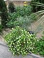 Mediterranean - US Botanic Gardens 75.jpg