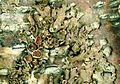 Melanohalea olivacea.jpg