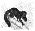 Menniskans härledning och könsurvalet illustration sida II-205.png