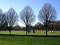 Millennium Stone Circle, Hilly Fields - geograph.org.uk - 311583.jpg