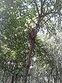 Monkey in Nature.jpg