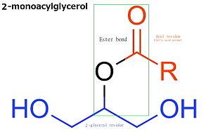Monoglyceride - Molecular structure of 2-monoacylglycerol