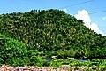 Montaña de palmeras de Baracoa - panoramio.jpg