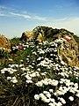 Monte Capra - panoramio.jpg