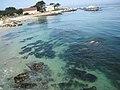 Monterey Bay (3480247542).jpg