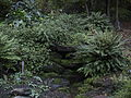 Mount Lofty Botanic Garden - Autumn1.JPG