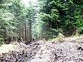 Muddy forest track - geograph.org.uk - 467248.jpg